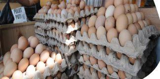 Harga Telur Dan Ayam Kampung Di Sampang Terus Meroket