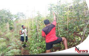 TNI Tanam Sayur Mayur Untuk Kebutuhan Masyarakat Papua