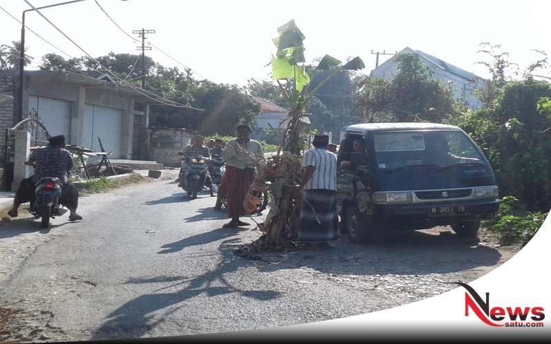 Protes Jalan Rusak, Sopir MPU Di Sumenep Tanam Pohon Pisang Di Jalan