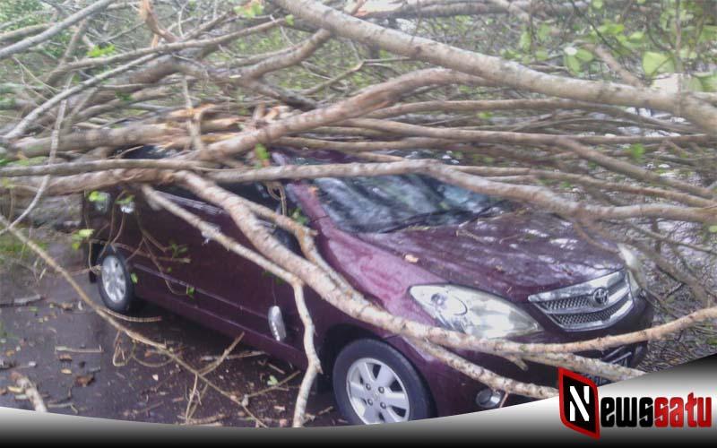 Angin Kencang, Sebuah Mobil Avanza Tertimpa Pohon