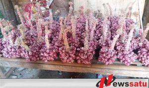 Harga Bawang Merah Di Probolinggo Anjlok