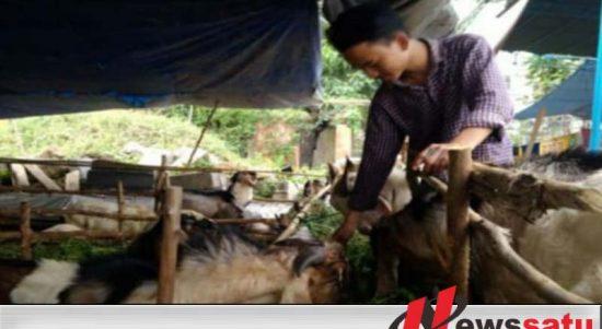 Pemkab Ogan Komering Ilir Periksa Kesehatan Hewan Kurban