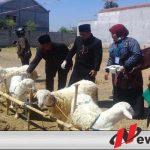 Wakil Wali Kota Probolinggo Tinjau Penjual Hewan Kurban