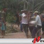 Anggota TNI Kodim 0402 OKI Gugur Saat Selamatkan Warga dari Amukan Gajah Liar