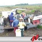 Ditengah Pandemi Petani OKI Siap Suplai Beras Dari Lahan Serasi