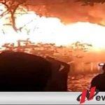 Gudang Pakan Ternak Babi Di Probolinggo Terbakar