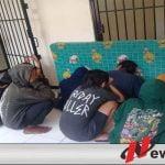 Belasan Anjal Diamankan Satpol PP Kota Probolinggo
