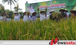 Kemendes PDT Hadiri Panen Raya Padi Varietas Unggul Di Bondowoso