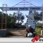 Wisata Ikan Paus Di Kabupaten Probolinggo Ramai Pengunjung