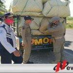 Banyak Akses Jalan, Pol PP Pamekasan Kesulitan Halau Tembakau Jawa