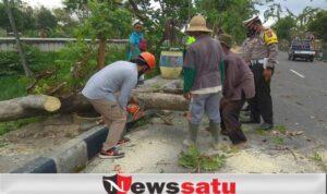 Angin Kencang, Warga Pamekasan Diminta Waspadai Pohon Tumbang