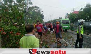 Pohon Tumbang, Lumpuhkan 2 Ruas Jalan Nasional Di Pamekasan