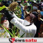 Kota Surabaya Punya Taman Hutan Raya Baru