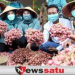 Panen Raya Bawang Merah, Pemkab Sampang Harapkan Swasembada Bawang