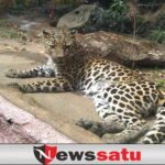 Hewan Jatim Park 2 Masih Aman Dari Virus Covid-19