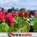 Dispertahortbun Sumenep Gelar Sekolah Lapang Bagi Petani Tembakau