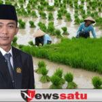 Harga Tidak Stabil, Komisi II DPRD Sumenep Desak Pemkab Lakukan Penyerapan Gabah