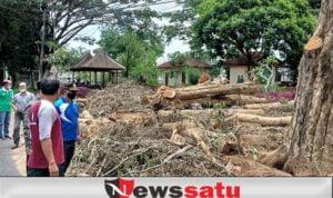 Wabup Irwan Dan Kepolisian Hentikan Pemotongan Kayu SonoKeling di Taman Magenda